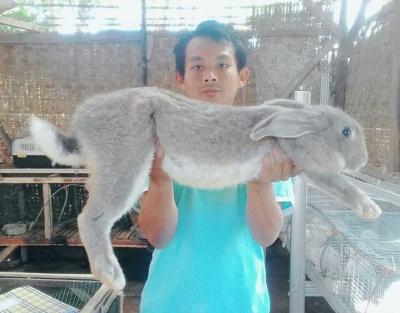 Fiella Rabbitry: Meraup Rupiah dengan Beternak Kelinci