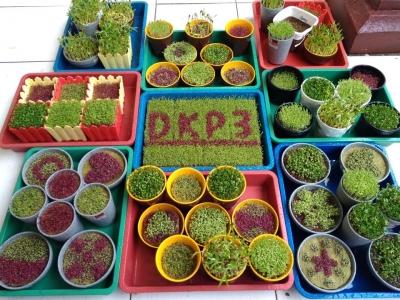 Microgreen: Sayuran Sehat yang Kini Merancah ke Sukabumi