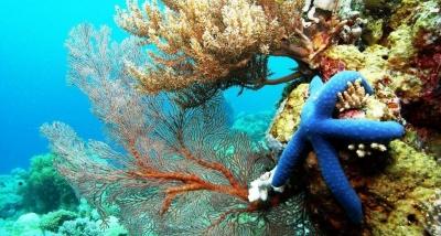Green Energy Kepulauan Selayar Menuju Kota Marina Dunia