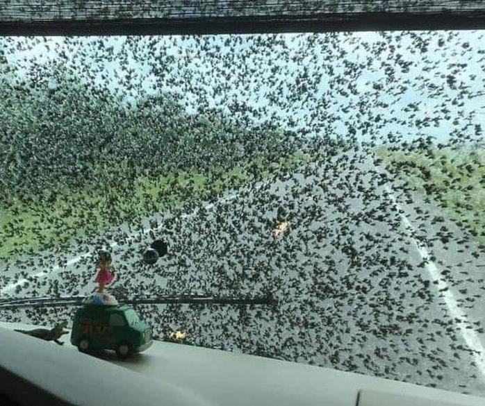 Serbuan Lalat Bercinta Untungkan Pebisnis Cuci Mobil di Amerika