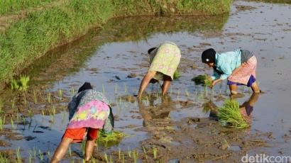 Darurat Regenerasi Petani, Indonesia Butuh 1.000 Anak Muda Seperti Nara
