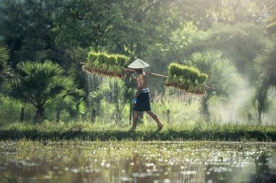 Kecanggihan Adat untuk Revolusi 4.0  Pertanian Indonesi