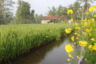 5 Capaian dan 5 Tantangan Infrastruktur Pertanian