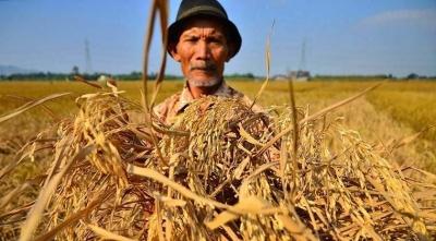 Penguatan Budaya Agraris sebagai Strategi Regenerasi Tani Indonesia