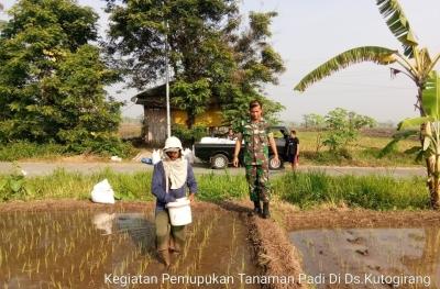 Babinsa Koramil 0815/12 Ngoro Bersama Petani Mantapkan Ketahanan Pangan