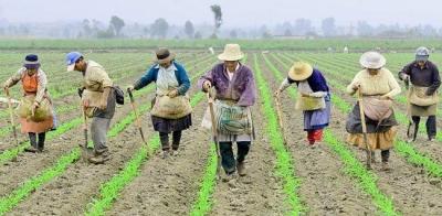 Reforma Agraria di Indonesia: Makin Terang atau Malah Mundur ke Belakang?