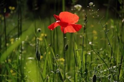 Puisi | Adakah Bayanganmu di Senja Itu
