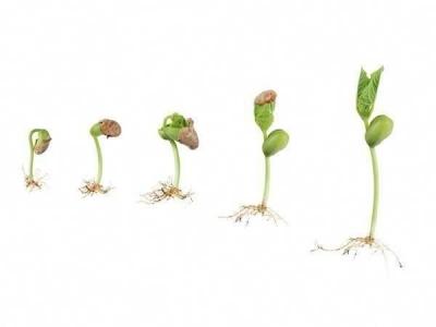 Potensi adalah Benih, Tumbuh Saat Terkubur