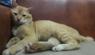 Wah Kucing Kok Diam Saja Ada Tikus Lewat
