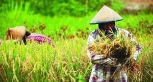 Tahukah Kita Hari Krida Pertanian Diperingati Setiap 21 Juni?