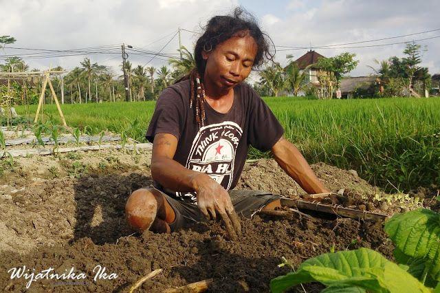 Bagi Hartono Lokodjoyo, Bertani Itu Pekerjaan Paling Nikmat dan Menguntungkan