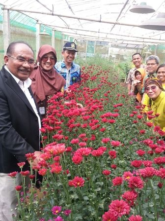 Menyambangi Petani Bunga Krisan di Gerbosari Kulon Progo