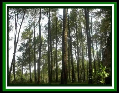 Bibit Tanaman Gratis dari Kementrian Lingkungan Hidup dan Kehutanan RI, Siapa Mau?