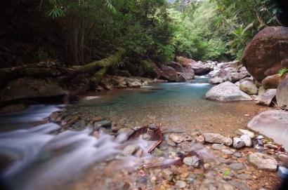 Puisi | Seteduh Hutan, Seperti Sungai Merindu Datangnya Hujan