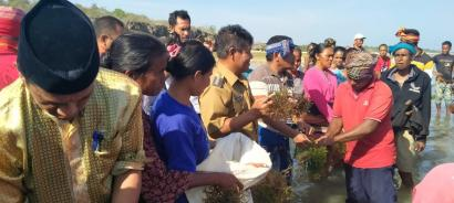 Bupati SBD Panen Rumput Laut di Kawona