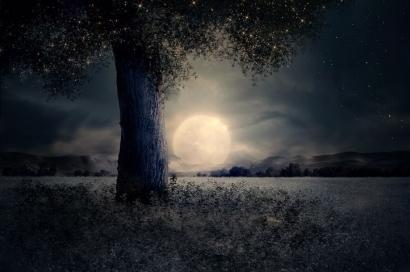 Puisi, Malam, dan Beberapa Dusta
