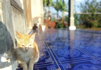 Kami dan Kucing Kampung Sama-sama Makan Nasi