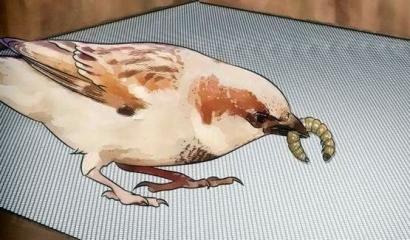 Teror Ulat Bulu dan Burung-burung yang Hilang dari Pekarangan Kita