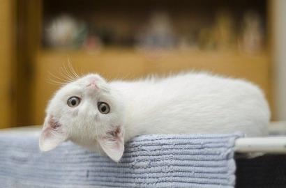 "Cerpen   ""New Cat on The Block"", Kisah Anak Kucing Malang"