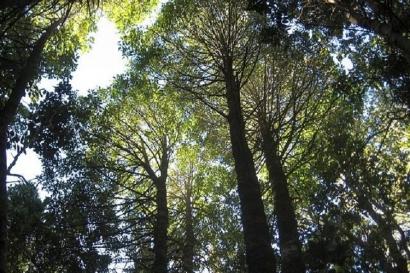 Pertanian Hutan Hujan dan Tantangan Masa Depan