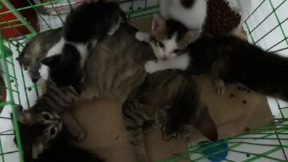 Kisah Kucing: Perlahan-lahan Muncul Jiwa Keibuannya
