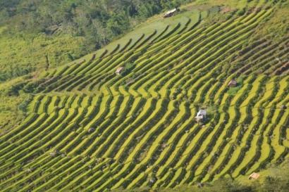 Menyigi Mimpi Petani Muda Manggarai
