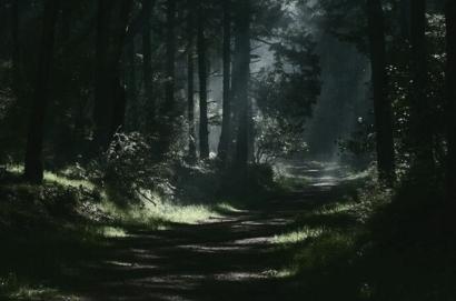 Hutan dan Kedai Malam