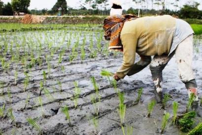Giliran Petani yang Balik Nawar