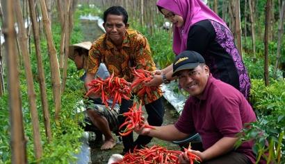 Urgensi Urban Agriculture dan Isu Keamanan Pangan