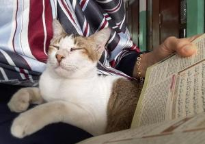 Kumpulan Artikel Terbaru Kucing Kompasiana Com