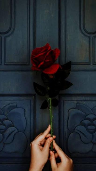 Setangkai Mawar Berduri dalam Genggaman