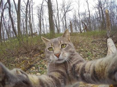 Kucing Manny Doyan Selfie