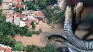 Waspada Banjir! Seperti Ular, Pencuri Pun Mengambil Kesempatan