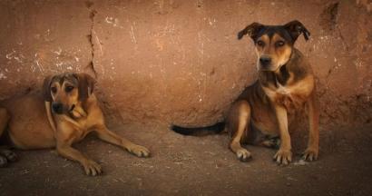 Mutts, Satu Lagi Film tentang Anjing
