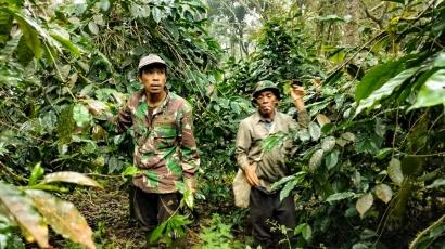 Cerita Petani Kopi Hutan Desa Labbo