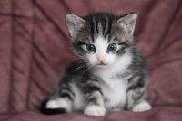 Kucing Bandel Itu Membuat Jatuh Hati