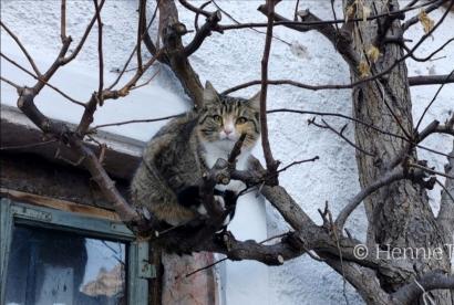 Mana yang Benar, Kucing Memiliki 7 atau 9 Nyawa?