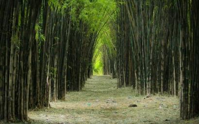 """Ngelmu Pring"", Inspirasi Hidup Bermanfaat dari Serumpun Bambu"