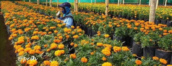 Perempuan Pengawin Bunga