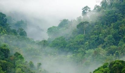 Hari Bumi, Jangan Lupakan Hutan
