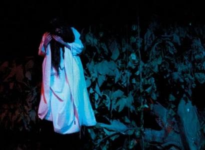 Hantu di Pohon Waru