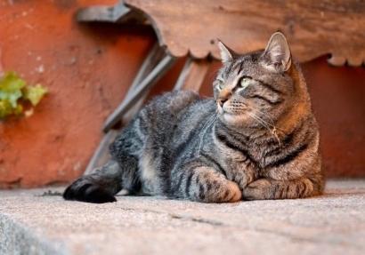 Ini Cara Cat Lovers Mendukung Net-Zero Emissions
