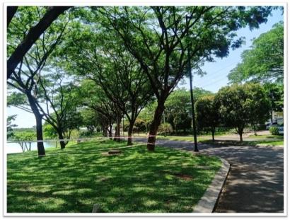 Menanam Pohon Trembesi untuk Penghijauan Guna Mendukung Net Zero Emissions