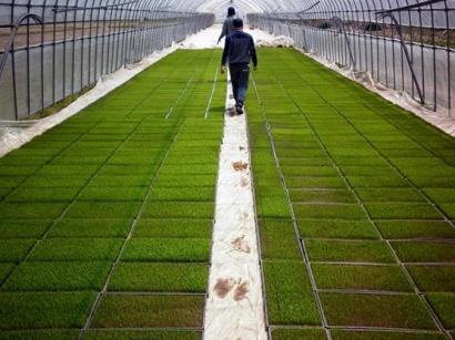 Hidup Bersama Petani (Bermobil) di Kitakata, Jepang