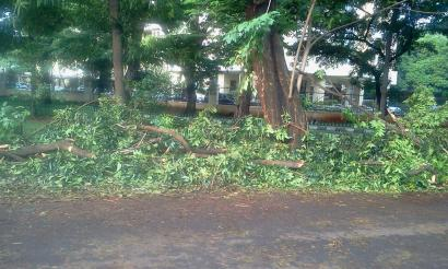 Tolong Antisipasi Pohon yang Rawan Roboh!
