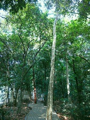 Wisata Murah Sehat di Hutan Kota Cijantung
